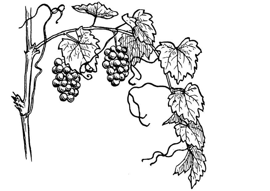 Рисовать виноградную лозу